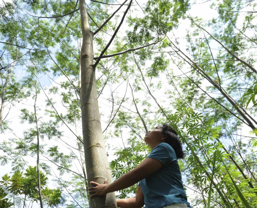 Indonesian woman standing by a two and a half years old sengon tree.
