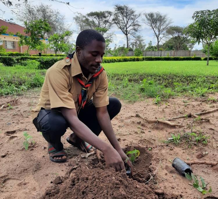 Male malawian scout planting a seedling