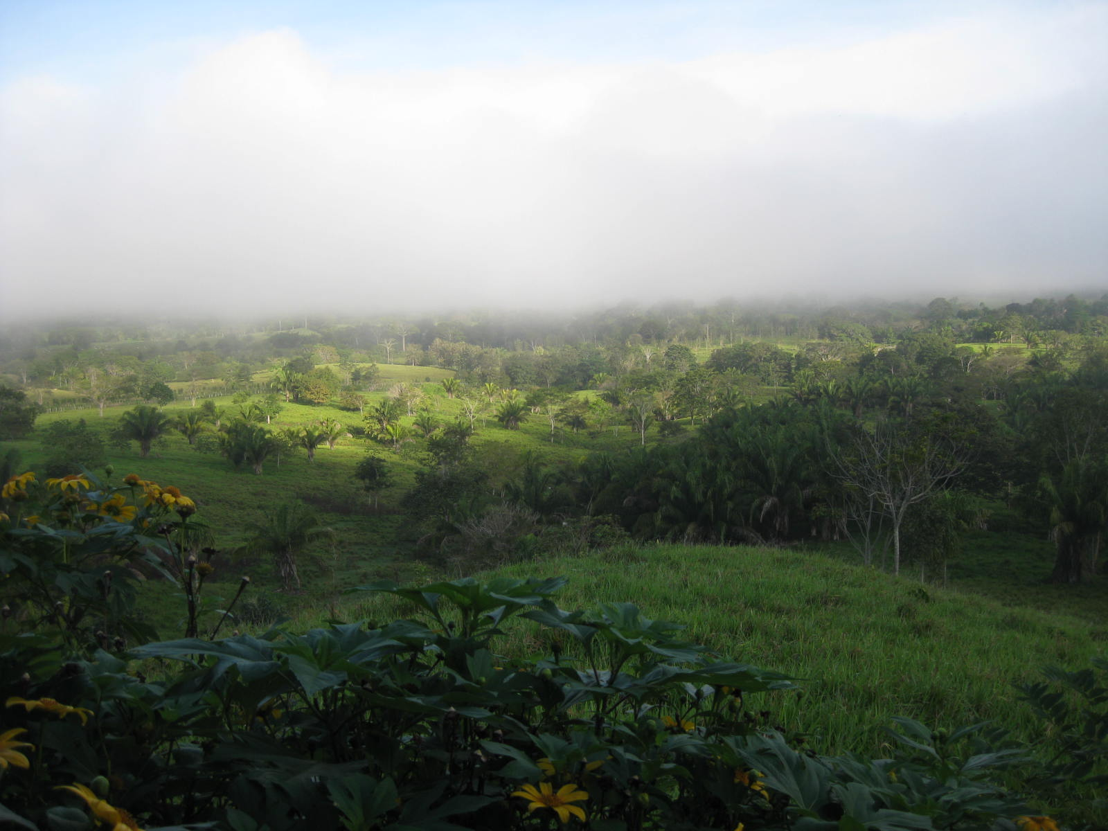 Fog over landscape in panama