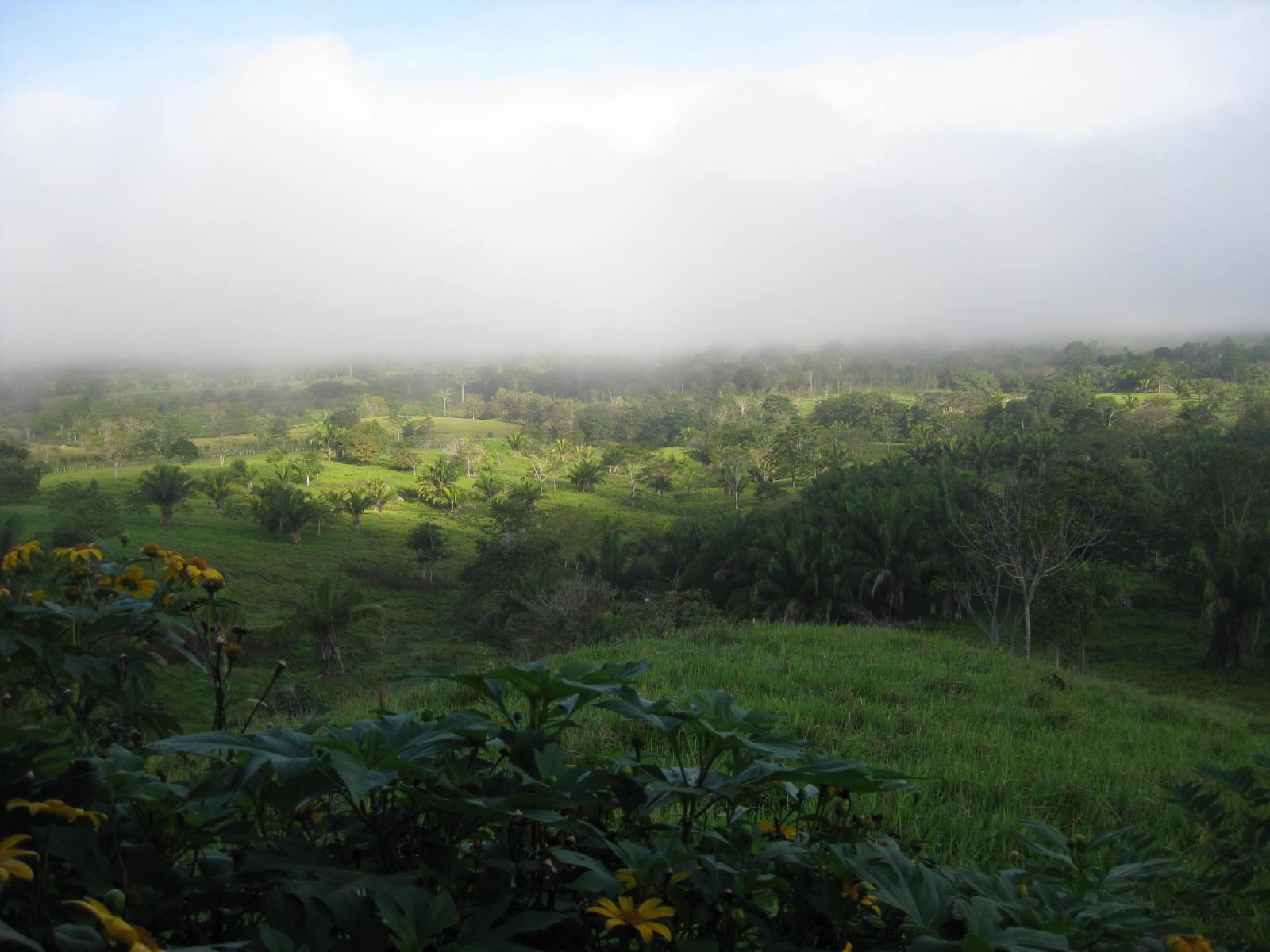 Fog over landscape in panama
