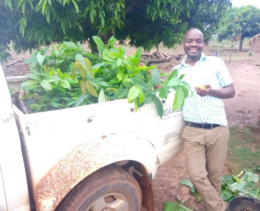 Transportation of the seedlings
