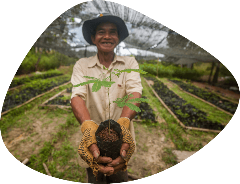 Project picture: Indonesian farmer showing sengon seedling